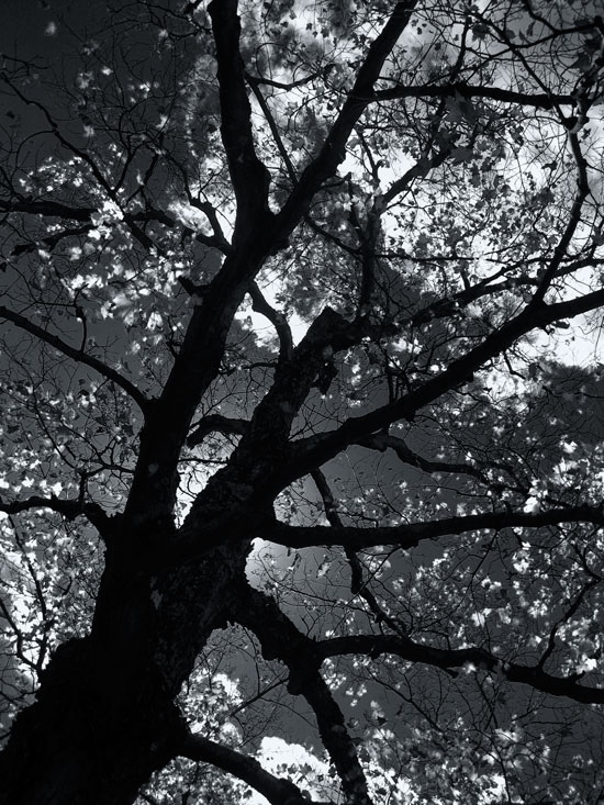 Dancing-Tree-Silhouette